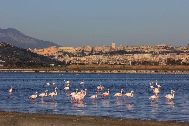 Fenicotteri_a_Cagliari