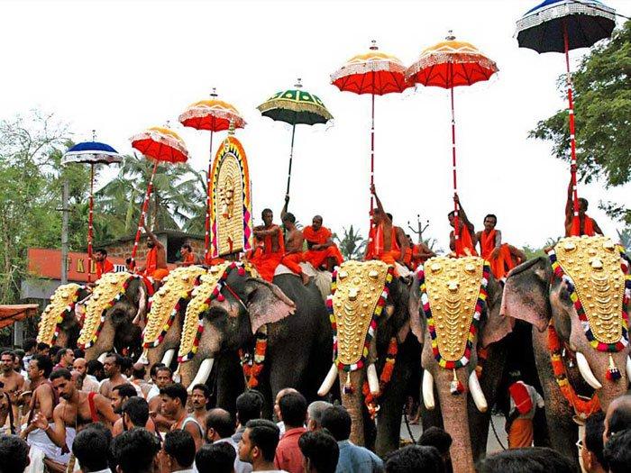 Cochin-Elephants